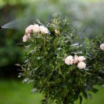 GARTENTIPP!! DIY Ackerschachtelhalm-Extrakt für gesunde & starke Pflanzen