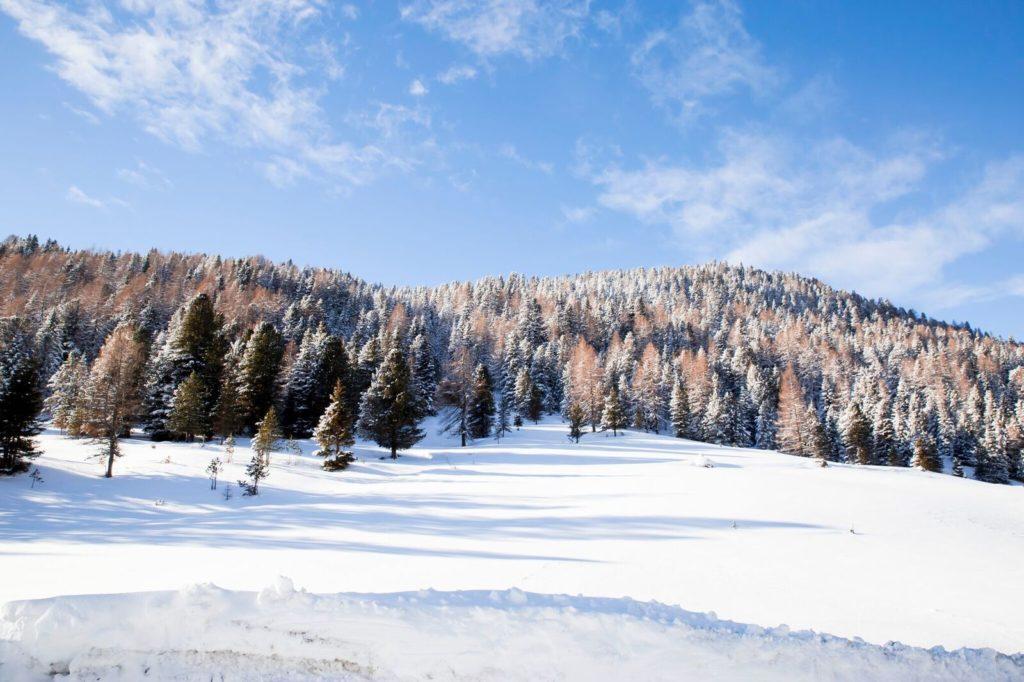 Lungau, Thomtal, Winter, Schneelandschaft, Heimische Harze sammeln, Fichten, Zirben, Lärchen
