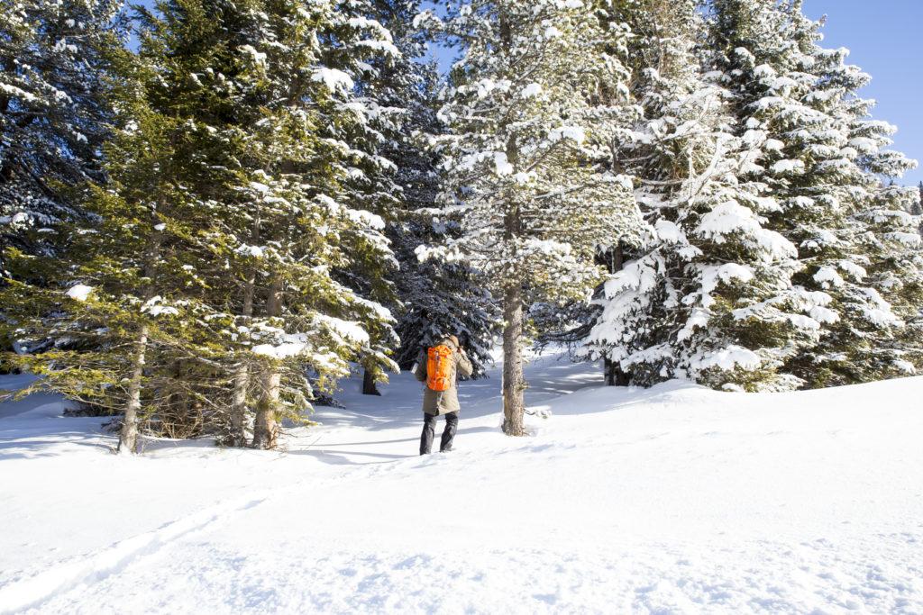 Lungau, Thomtal, Schneelandschaft, Zirbenwald, Zirbenharz sammeln