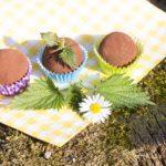 Gesunde Süßigkeit und Power Snack – Brennnessel-Energiebällchen
