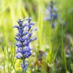 Wilde Blumendeko – Günselnest selbst gemacht