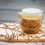 Süß sauer eingelegte Haselkätzchen