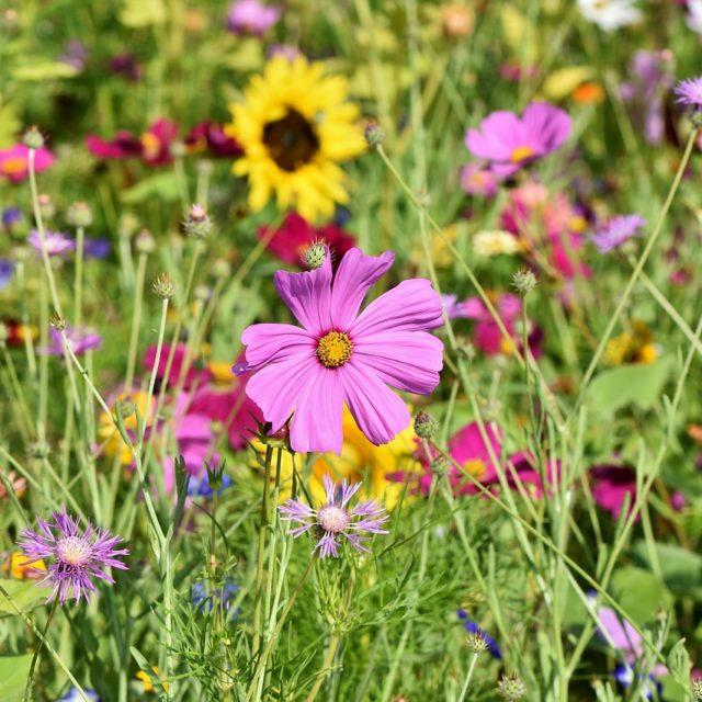 Blumenwiese - Pixabay